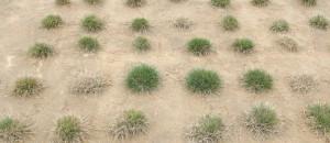 65_5_columns_REL230815_salt_rye_grass-728x315