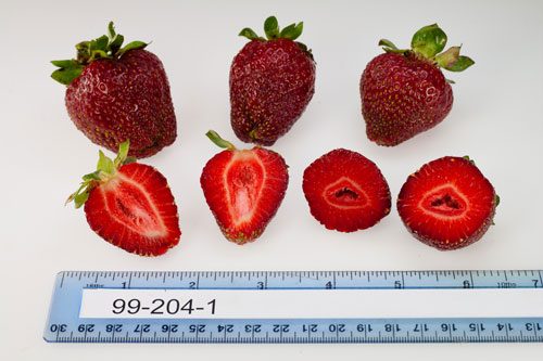 strawberry-selections-June-7-2013-14